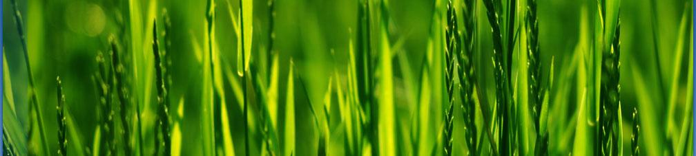 Die mkv consulting entwickelt Software für das Ökokontrolling im Bereich des betrieblichen Umweltmanagements.